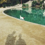Barcelona_dog & shadow