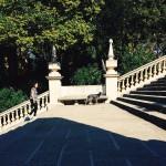 Barcelona_upstairs / dog