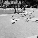 Barcelona_tauben / black & white